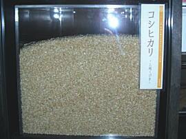 このお米が、ふぁーむ大地のコシヒカリ