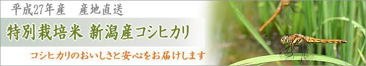平成27年産 特別栽培米コシヒカリの販売