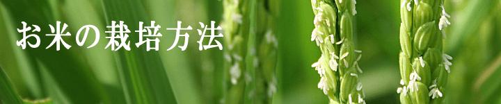 お米の栽培方法