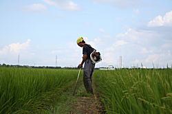 田んぼの畦を草刈り