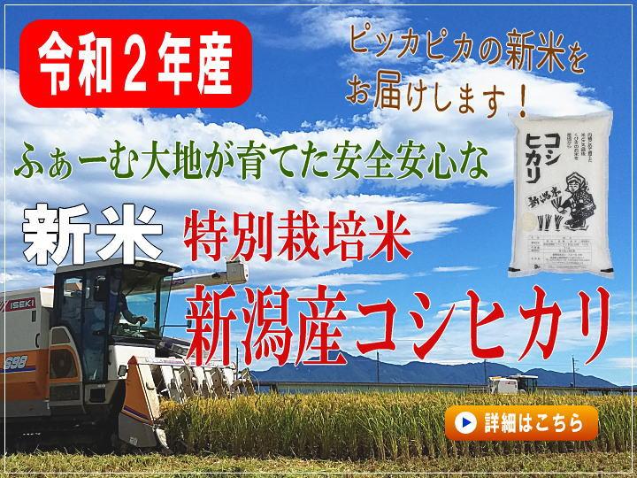 令和2年産 特別栽培米コシヒカリの販売