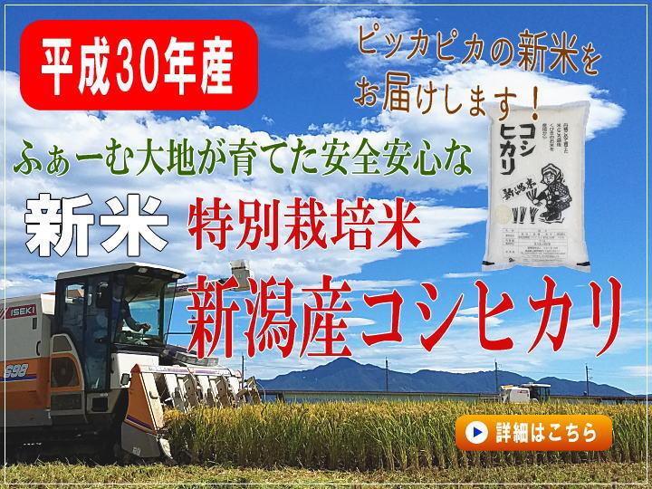 平成30年産 特別栽培米コシヒカリの販売
